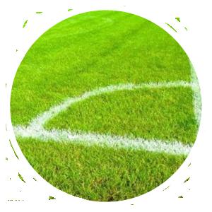 Sportveldonderhoud Natuurgras